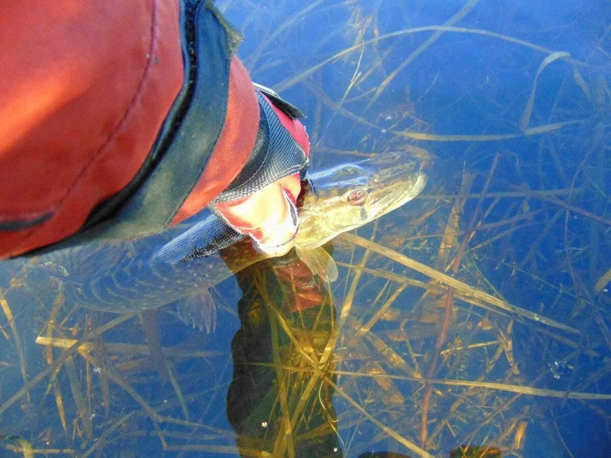 Авто для рыбалки и охоты — топ-11 бюджетных вариантов