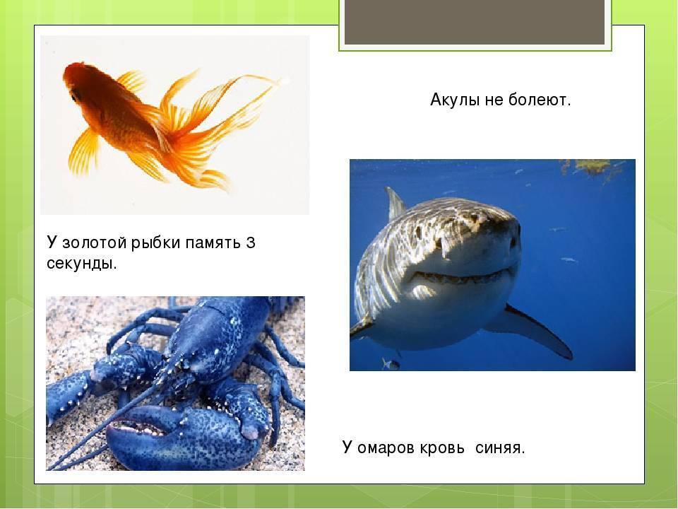 ✅ какая память у рыб? эксперементы и различия в видах. сколько секунд длится память у рыб: мифы о домашних рыбках - sundaria.su