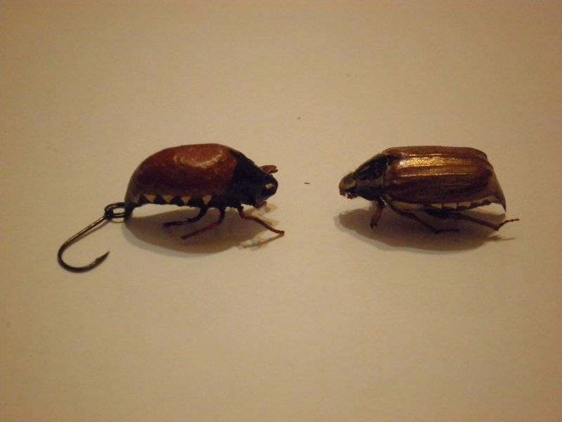 Ловля голавля. оснастка, техника и тактика ловли на майского жука