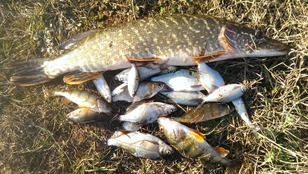 Рыбалка в могилеве и могилевской области, какая рыба клюет на реке днепр