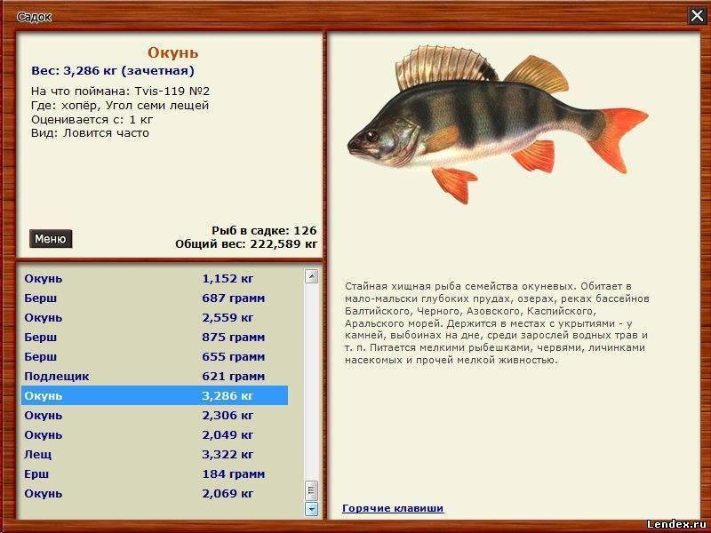 Морской окунь сколько весит - рыбалка