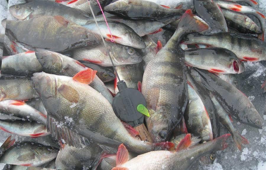 Все о рыбалке в башкирии