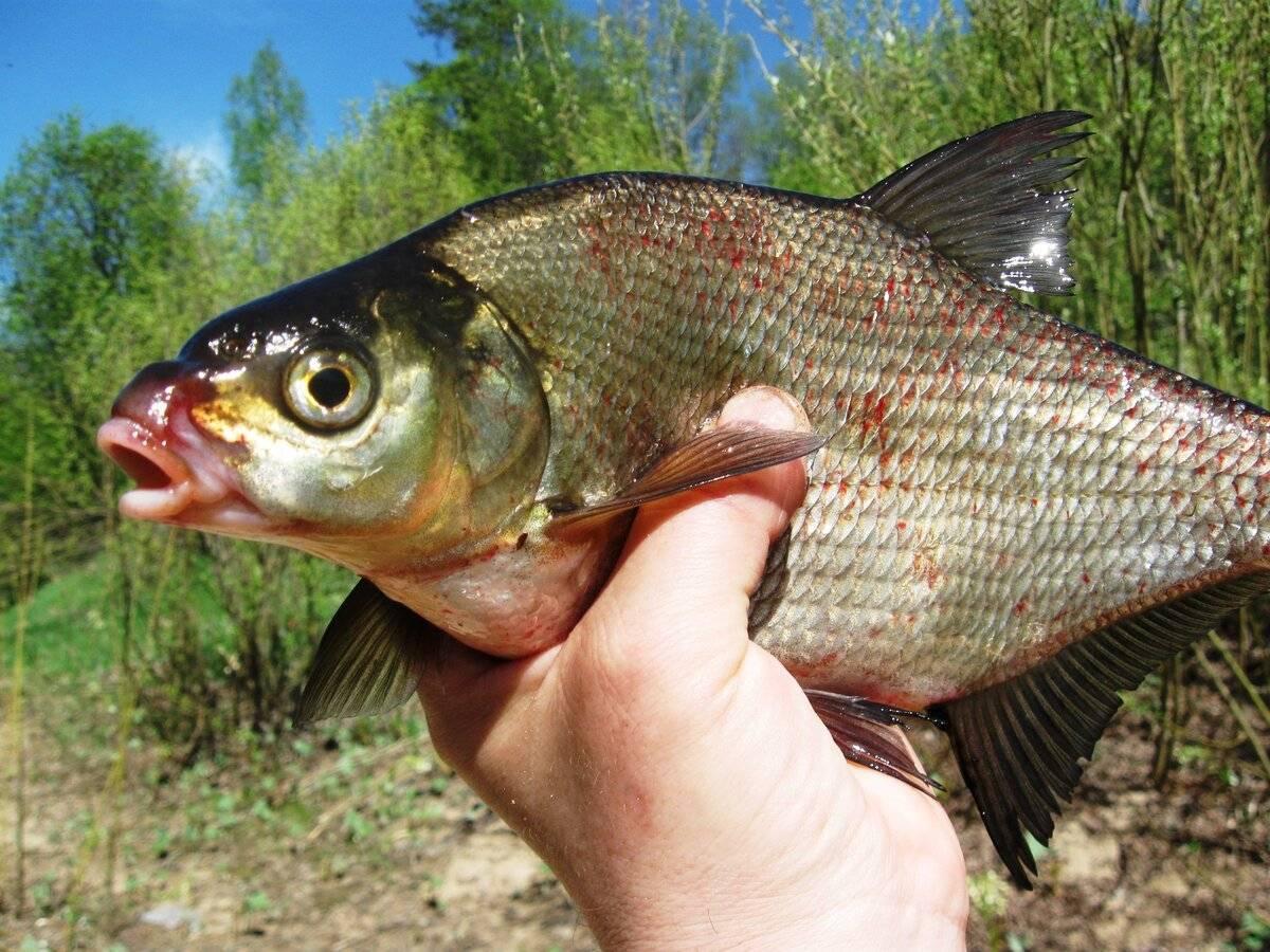 Рыбалка на амуре