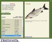 Рыба муксун – строение, места обитания, нерест