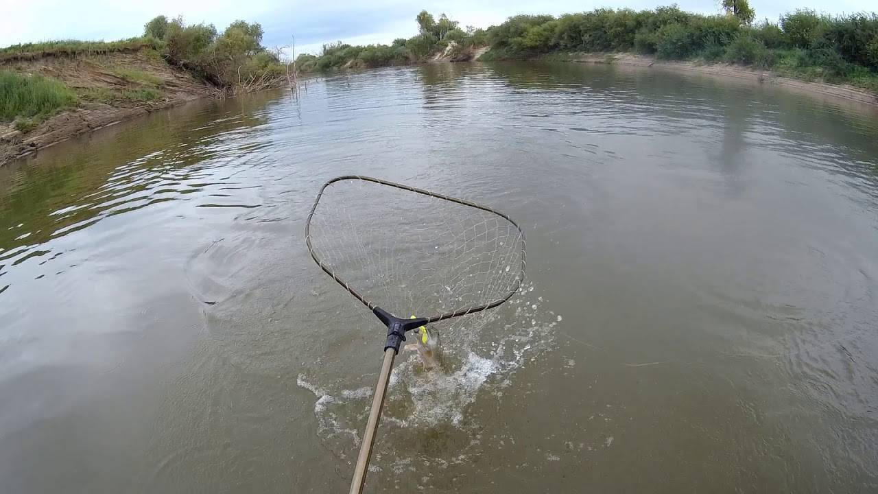 Рыбалка в ишиме и ишимском районе — лучшие места для ловли, какая рыба водится в реке