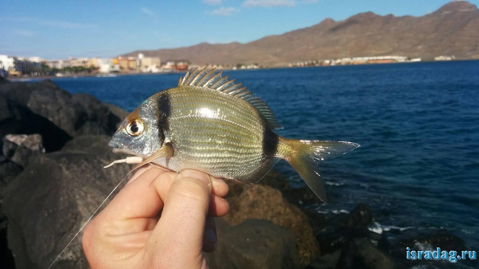 Морские рыбы с названиями и описанием: список с фото