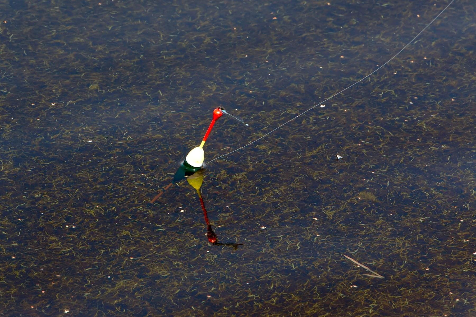 Как оснастить маховую поплавочную удочку начинающему рыболову