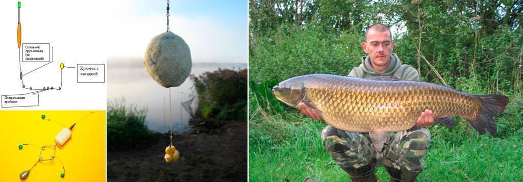 Ловля белого амура [подробное руководство] – рыбалке.нет