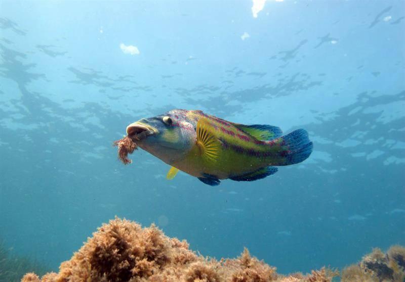 Какая рыба водится в черном море: виды, название и описание | вся планета