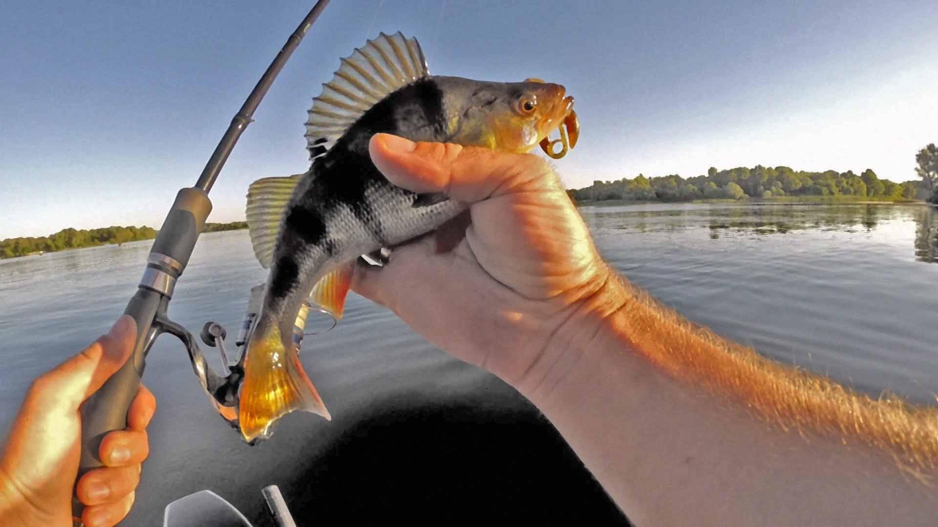 Как ловить на спиннинг? рыбалка на спиннинг - советы рыболовов