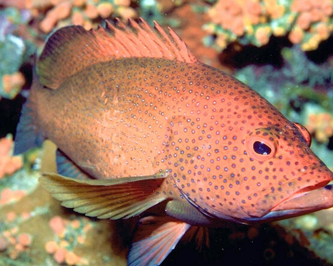 Умбра (черный горбыль): вылов рыбы, особенности выбора снастей и мест рыбалки (70 фото)