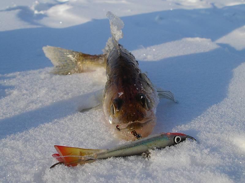Ловля судака на балансир зимой - снасти и тактика