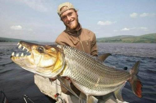 Африканская тигровая рыба голиаф: речные монстры