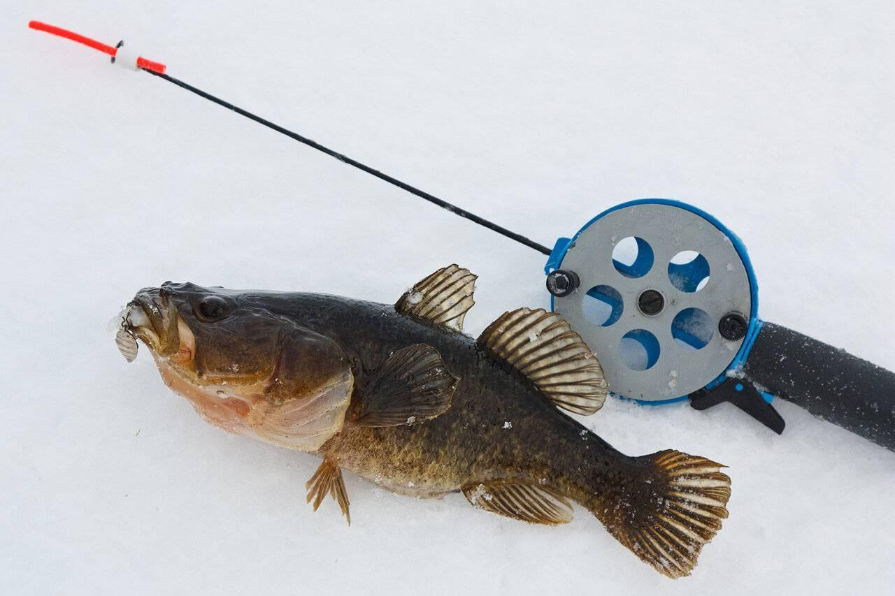 Как ловить ротана на спиннинг
