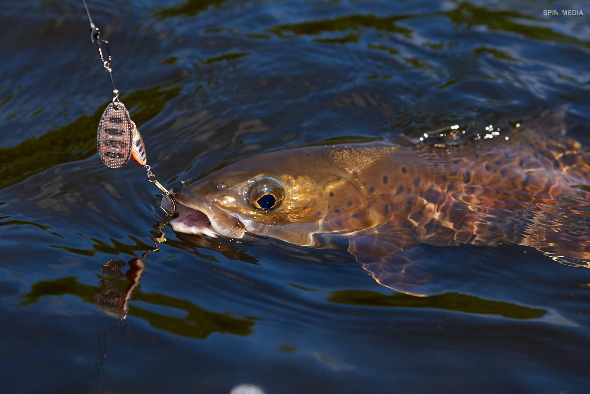15 советов по ловле ленка – рыбалке.нет