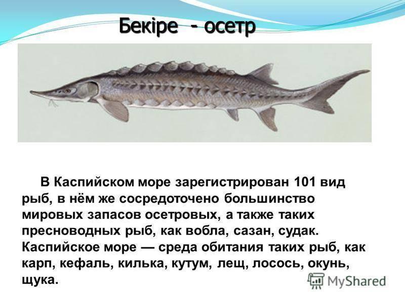Где обитает треска в россии: описание, виды, образ жизни, ловля