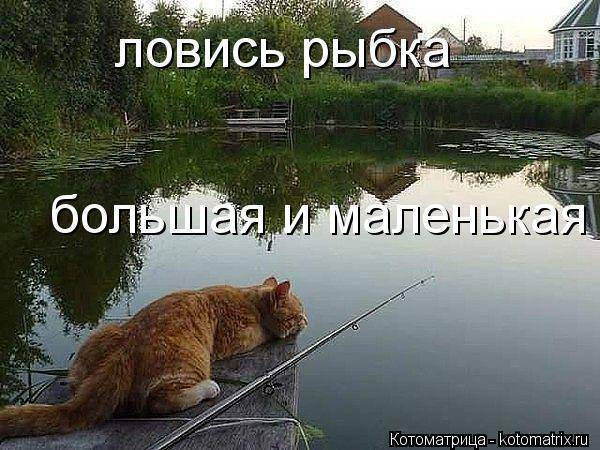 Ловись рыбка, большая и очень большая!!! - страна мам