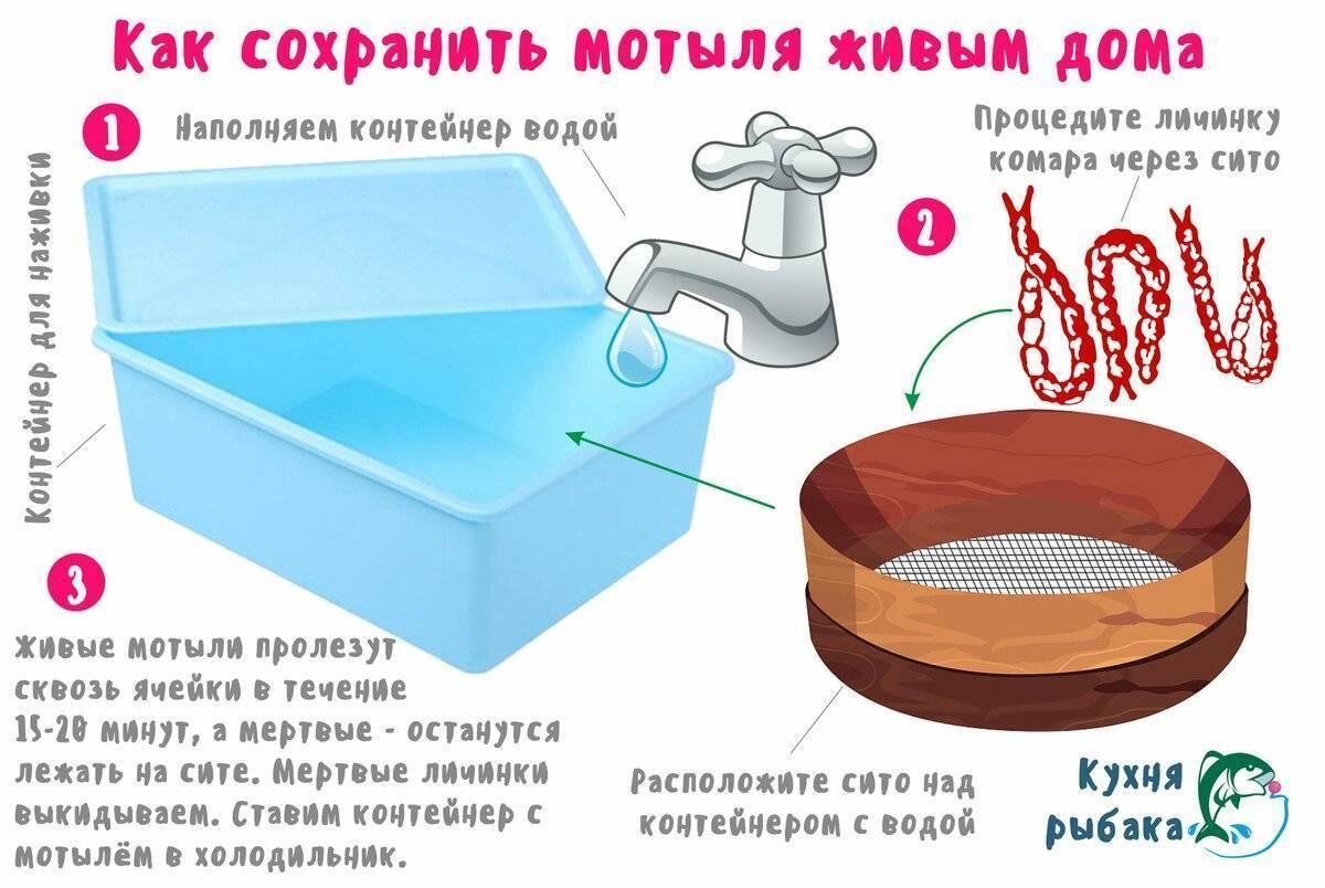Как хранить опарыша: 3 принципа, правила хранения и кормления