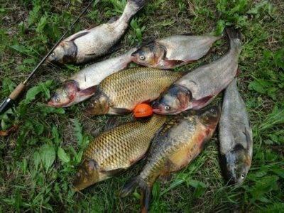 ✅ рыбалка в юсупово — рыболовный клуб с проживанием в дмитровском районе - рыбзон.рф
