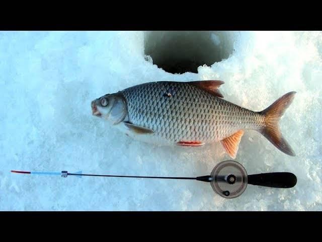 Ловим плотву зимой -секреты и советы. все про рыбалку
