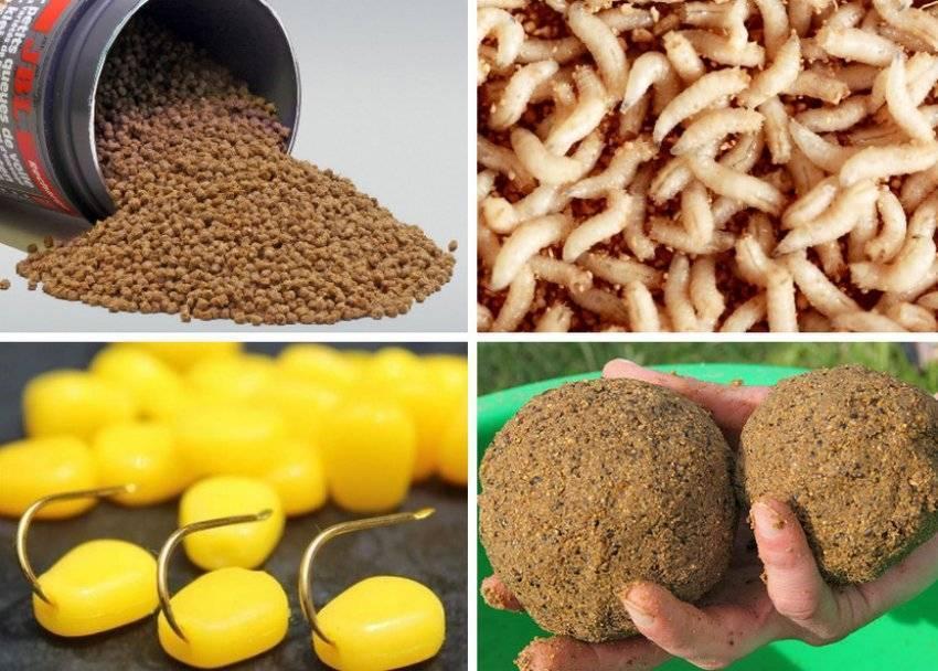 Прикормка для сазана: варианты самодельных и покупных составов