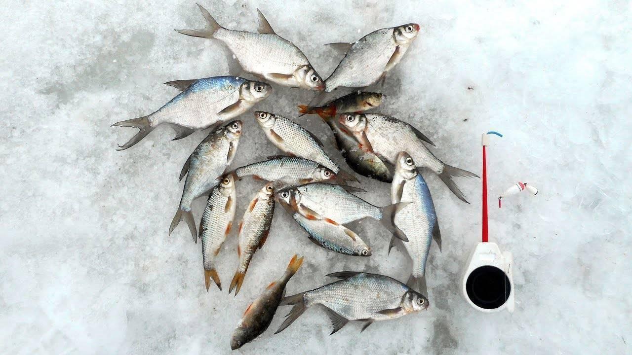 Ловля щуки в феврале: клюет ли, где стоит, на что ловить. особенности лова февральской щучки