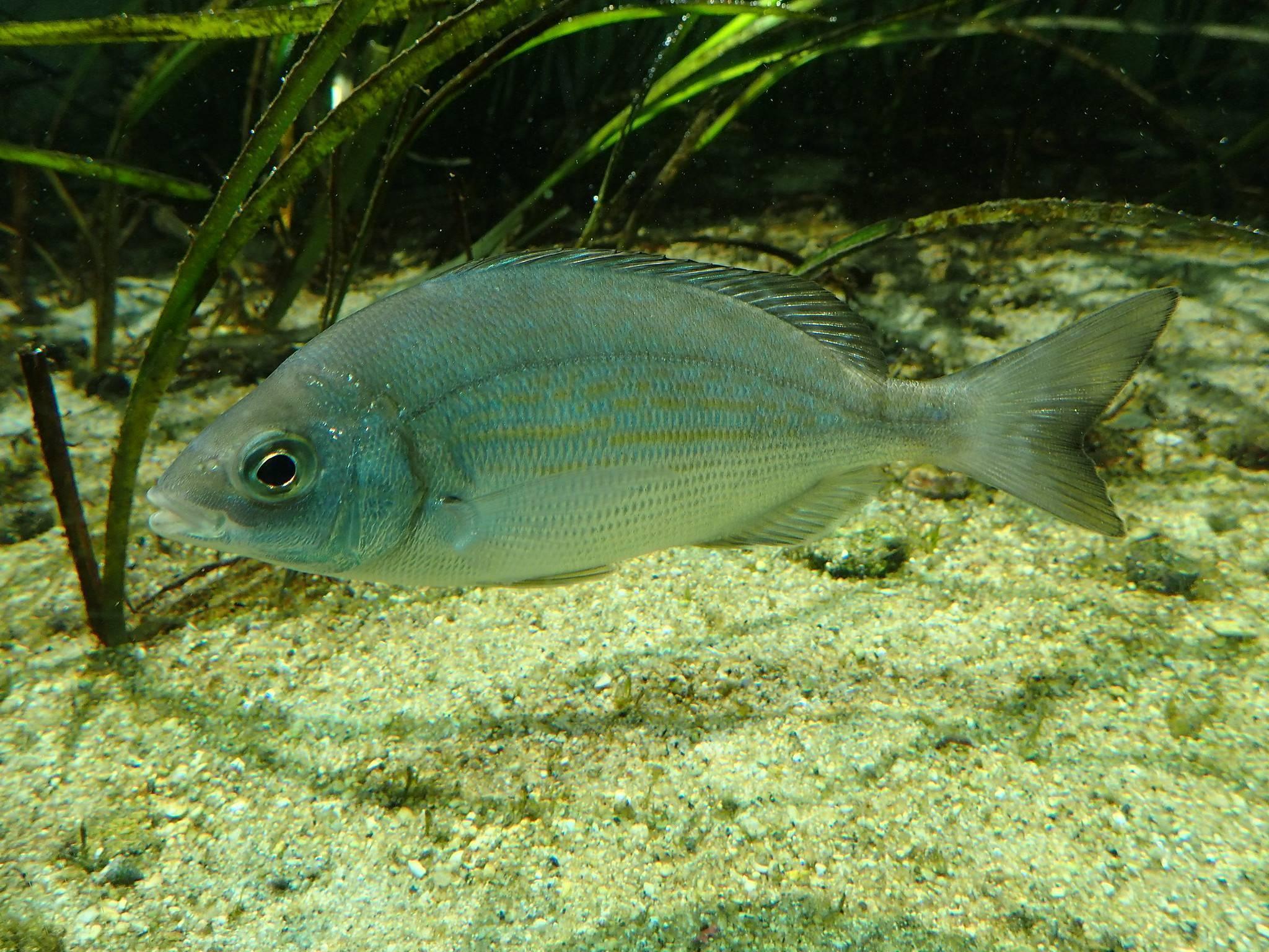 Карась — описание рыбы, польза и вред, как выбрать и рецепты приготовления на ydoo.info