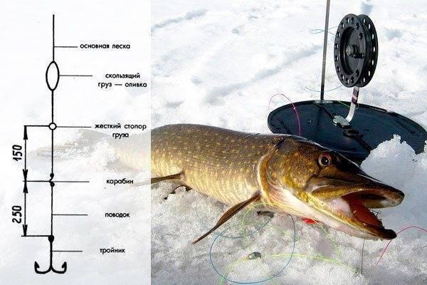 Как ловить форель зимой: (снасти для зимней рыбалки и способы ловли форели)