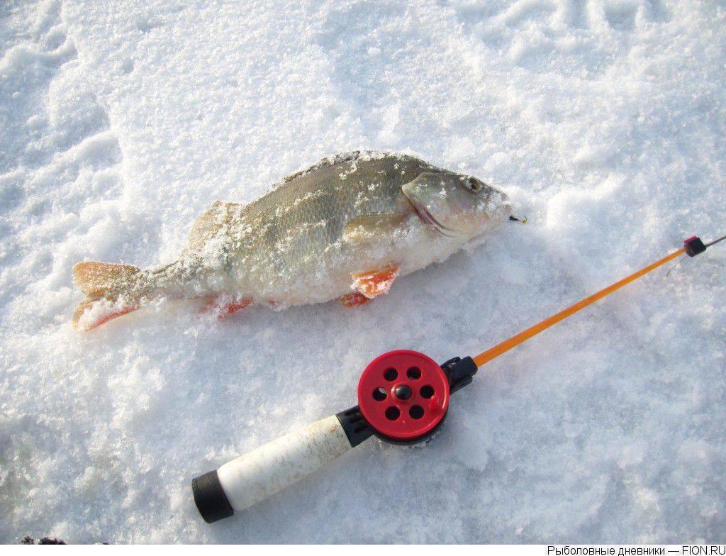 Яузское водохранилище: рыбалка в подмосковье