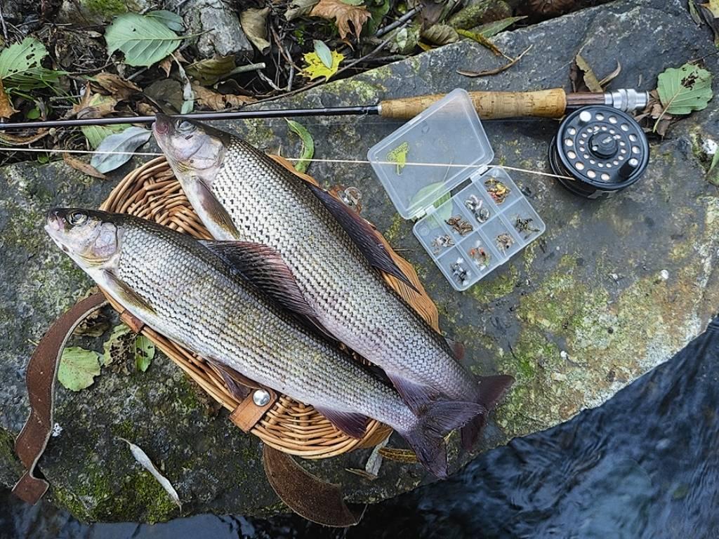 Рыбалка на Ангаре зимой или весной