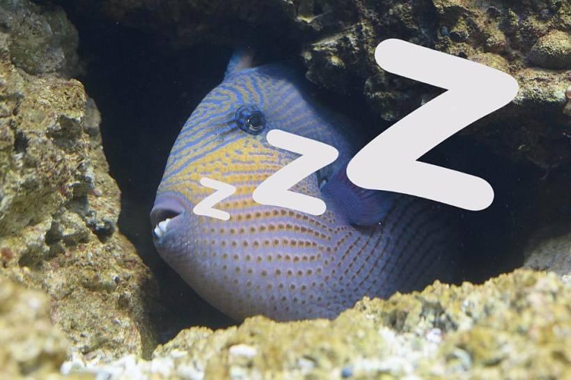 Как спят рыбы в аквариуме ночью и спят ли вообще: видео, фото