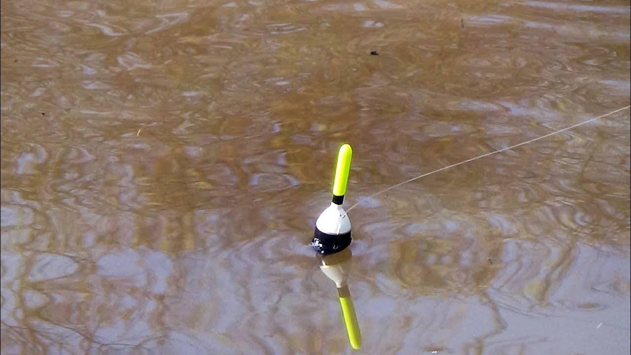 Ловля карася на поплавочную удочку: снасти, техника и тактика, выбор места, наживки и прикормка для рыбалки