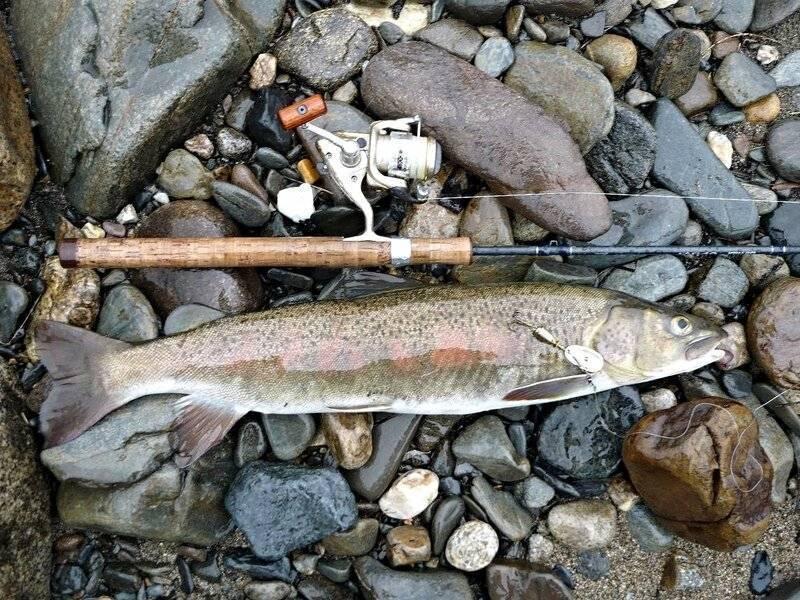 Рыба ленок: как выглядит, чем отличается от тайменя, образ жизни