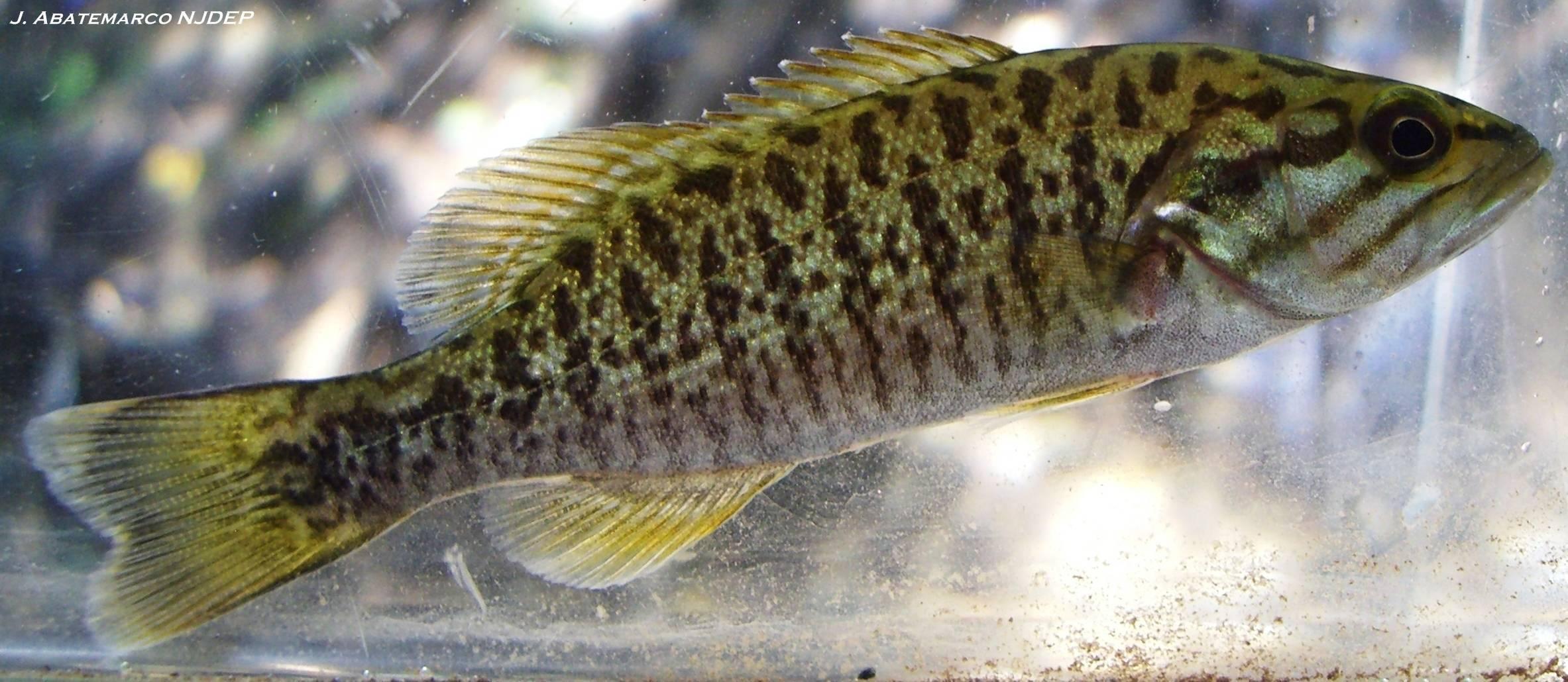 Малоротый басс рыбалка – эри, pa - fishingbooker