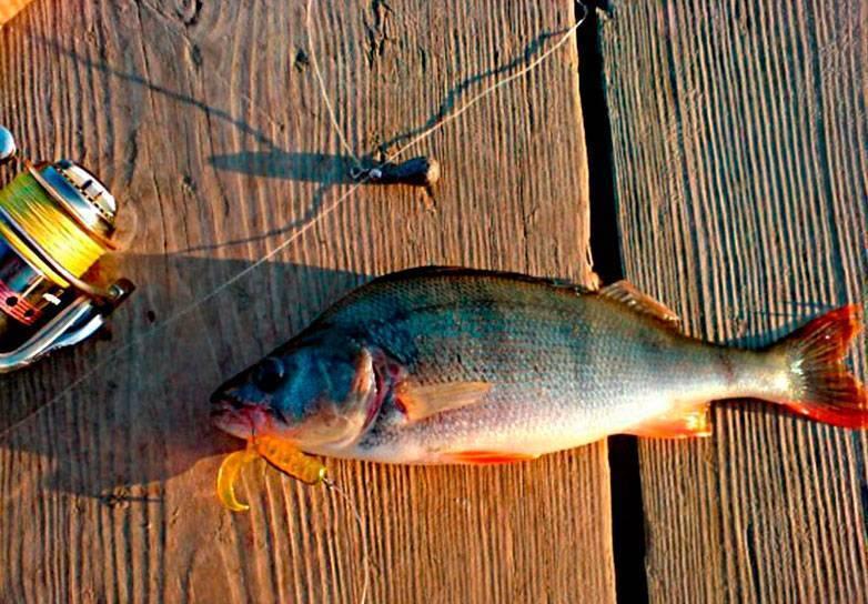 Ловля окуня на ультралайт зимой, весной, осенью, на озере.