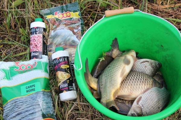 Лещ осенью на фидер: рыбалка поздней осенью на реке и озере