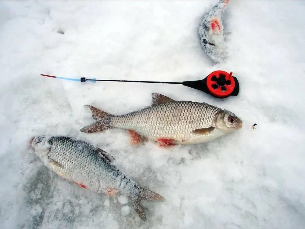 Как ловить сорожку зимой со льда на мормышку и покаток
