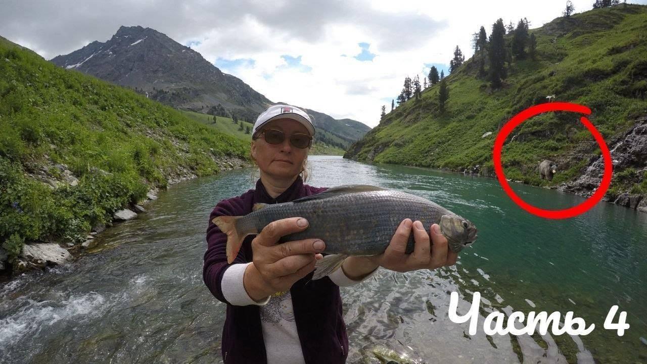 Рыбы, которые водятся в реке енисей