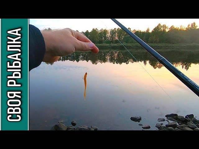 Рыбалка на канале имени москвы