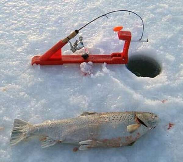 Как ловить форель зимой? настраиваем снасти, подбираем приманки.