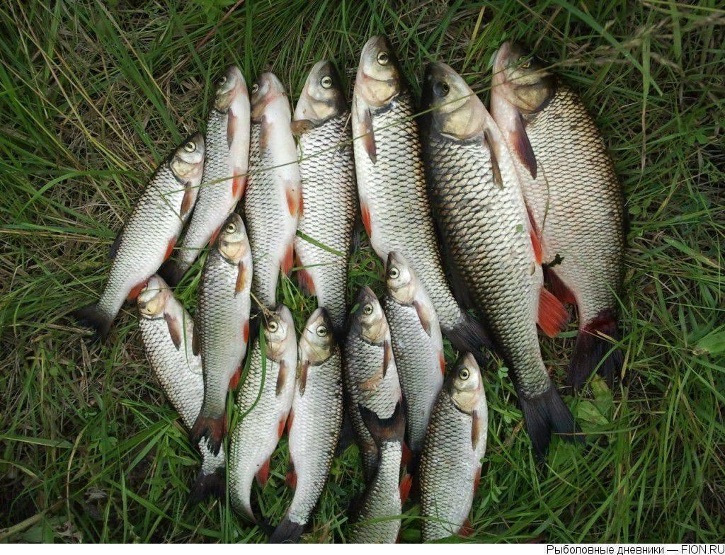 ᐉ ишим - место для рыбака - ✅ ribalka-snasti.ru