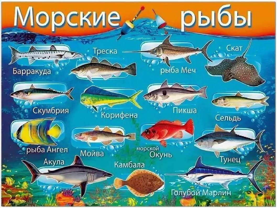 Рыба и морепродукты: что относится, какие бывают, полный список с названиями