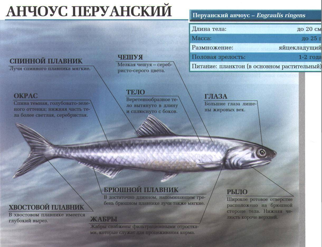 Морская рыба: список, виды и названия