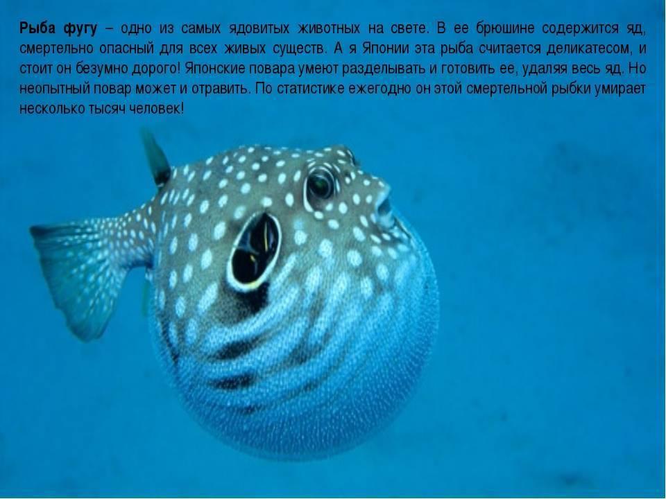 Аквариумные рыбки: содержание и уход, чем кормить и сколько они живут, спят ли рыбы в аквариуме