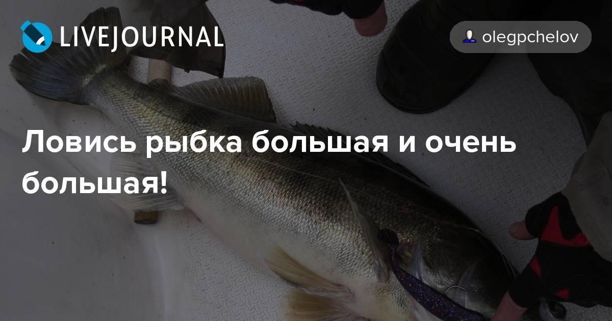 Конспект нод «ловись, рыбка, большая и маленькая»