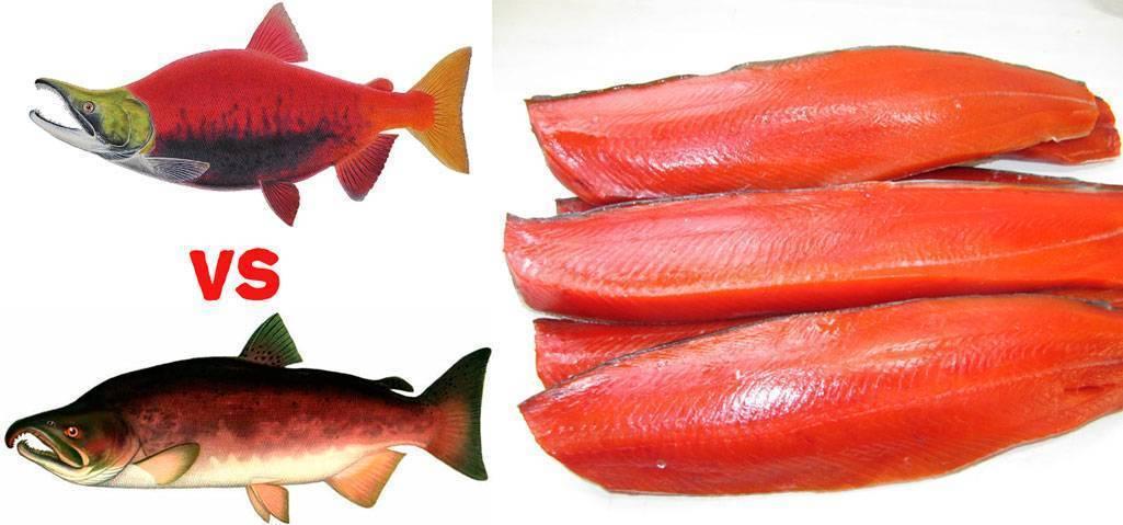 Описание морской красной рыбы кеты и ее полезных свойств; в каких случаях кета может принести вред