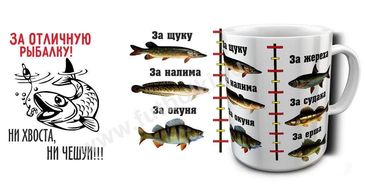 Топ-6 лучших рыболовных интернет-магазинов товаров — рейтинг 2020