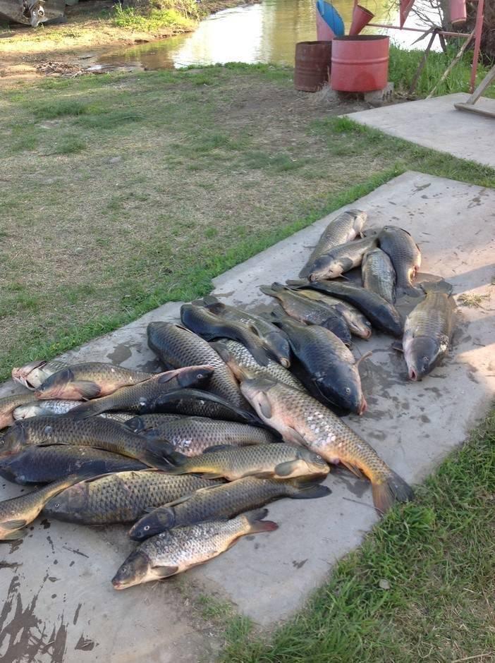 Платная рыбалка в раково – суперулов – интернет-портал о рыбалке