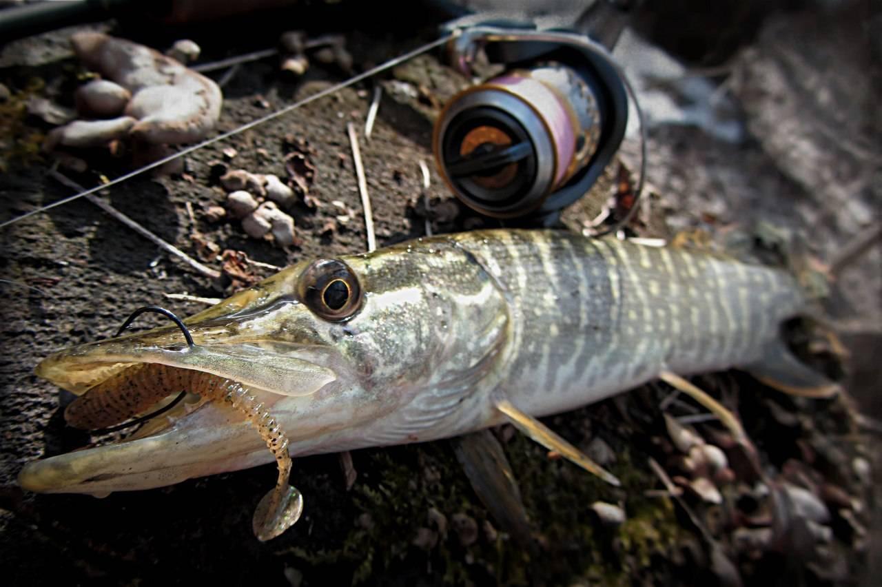 Ловли щуки в августе: где искать, на что ловить, секреты рыбалки на спиннинг
