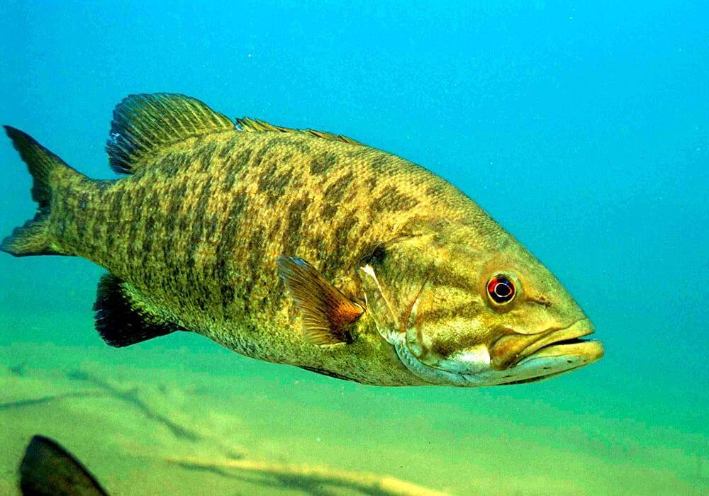 Басовая рыбалка - bass fishing